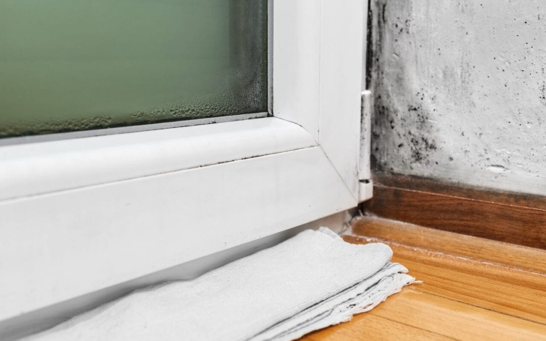 Prevent mold in your home by keeping moisture under control