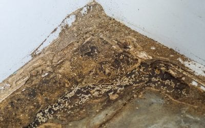 5 Signs of Termites in Your Home